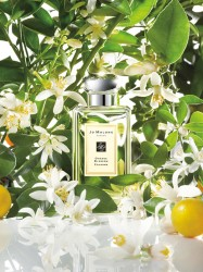 Orange Blossom Cologne (JM) 100ml унисекс