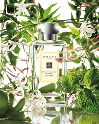White Jasmine & Mint Cologne (JM) 100ml унисекс
